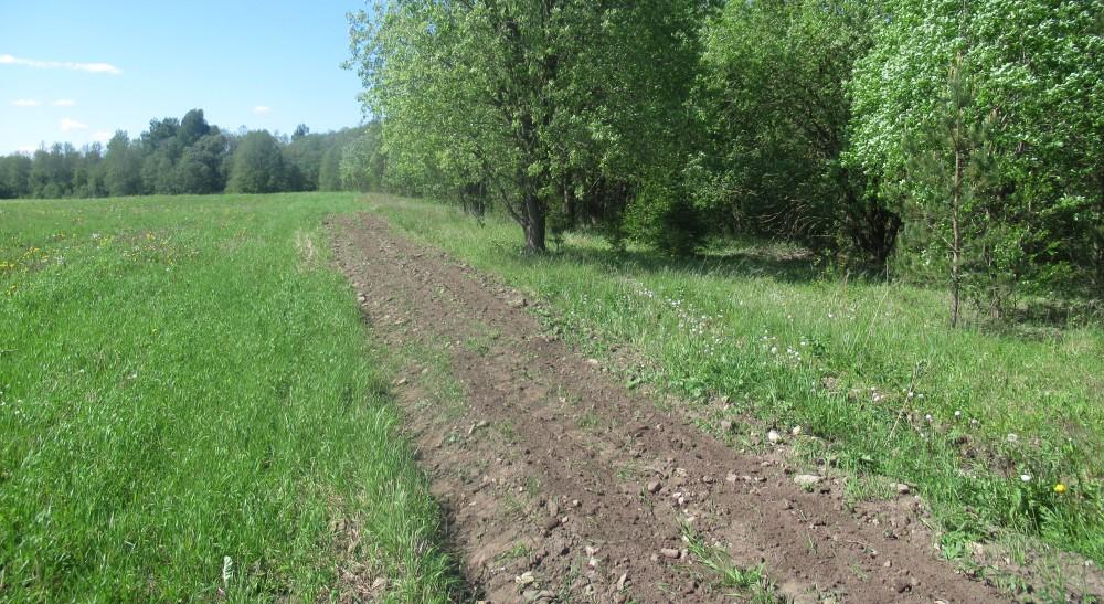 Külviriba kuival mullal