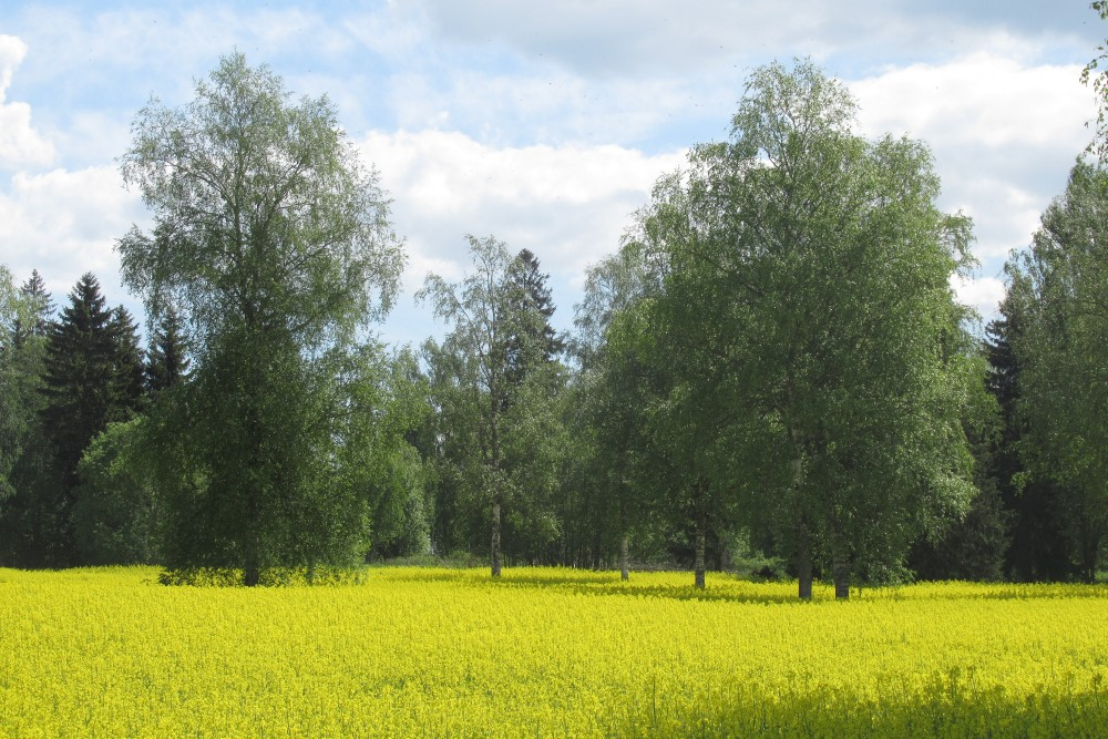 Põllu-metsandus / Agro-forestry